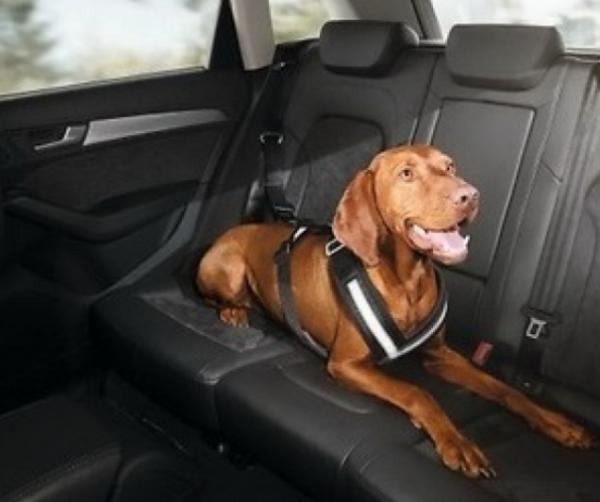 Correa de seguridad para perros